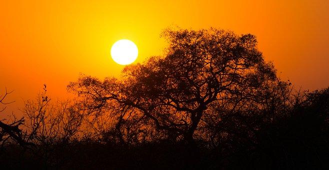 South Africa, Sunrise, Landscape, Park, Safari