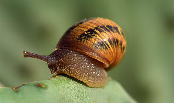 Snail, Cactus, Macro, Reptile, Nature, Shell, Spiral