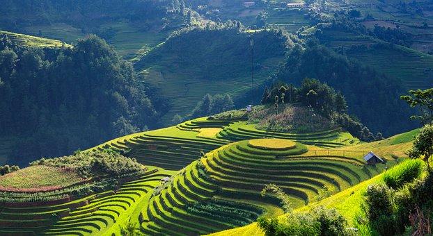 Scenery, Silk, Terraces, Mu Cang Chai Yen Bai Vietnam