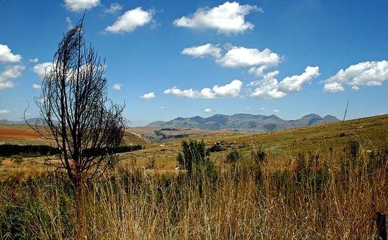 Mountain Landscape, Mountains, Fields, Grassland, Tree