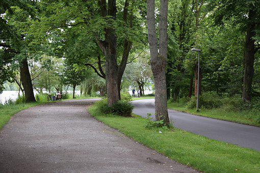 Forest, Path, Trees, Nature, Leaf, Hiking, Landscape