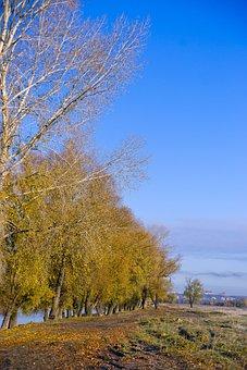 Road, Village, Autumn, Morning, Landscape, Nature