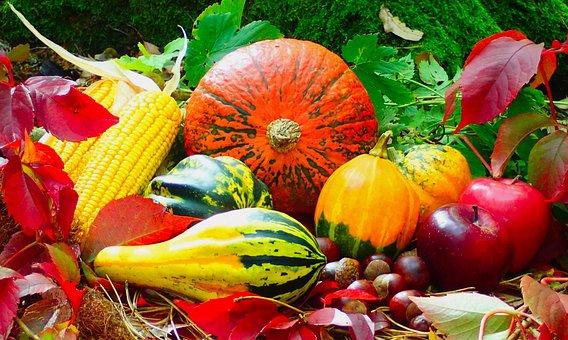 Autumn, Fruits, Assorted, Harvest, Fall, Season, Nature