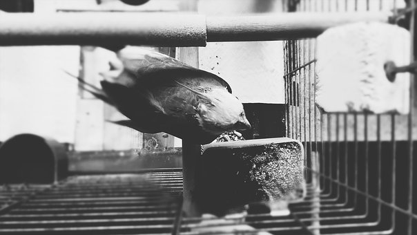 Parrot, Bird, Cage, Feather, Black, Wing, Deep, Dark