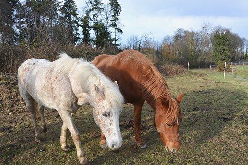 Horses Graze, Herbivore, White Horse, Brown Horse, Mare