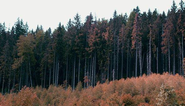 Forest, Nature, Autumn, Trees, Landscape, Fringe