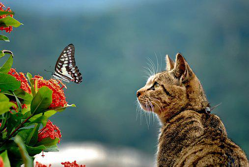 Cai Long Yu, Green-spotted Swallowtail, Cat