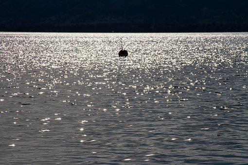 Lake, Sparkle, Backlighting, Water, Nature, Shine