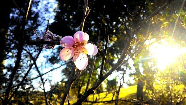 Flower, Sol, Sun, Flowers, Clouds, Landscape, Spring