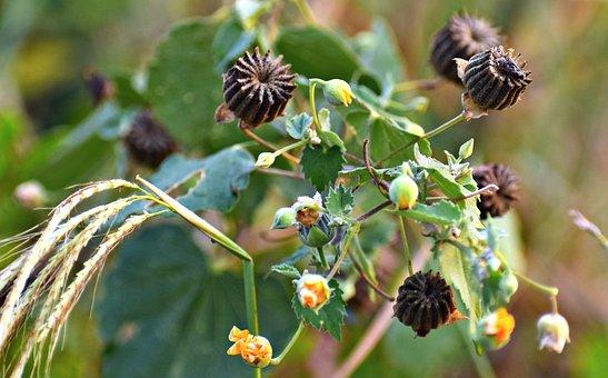 Wildflowers, Ragworts, Weed, Plants, Gear Trains
