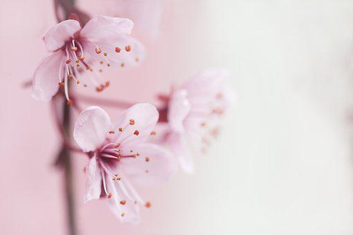 Spring, Blossom, Flowers, Pink, Nature, Bloom, Tree