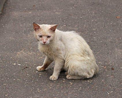 Cat, Cat Dreams, Fluffy Cat, Cats, Pet, Gray Cat