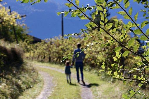 Autumn, Walk, South Tyrol, Apple, Wine, Family, Father