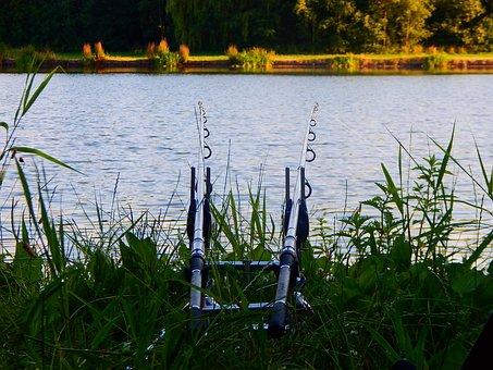 Fishing Rod, Fish, Water, Nature