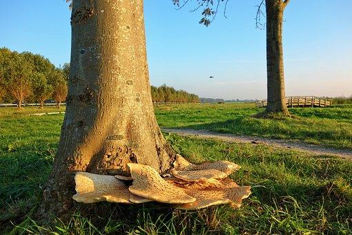 Mushroom, Fungus, Fungi Autumn, Tree, Trunk, Grass