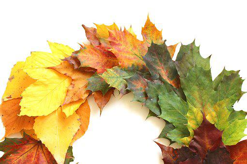 Leaves, Autumn, Fall Foliage, Leaf, Golden Autumn