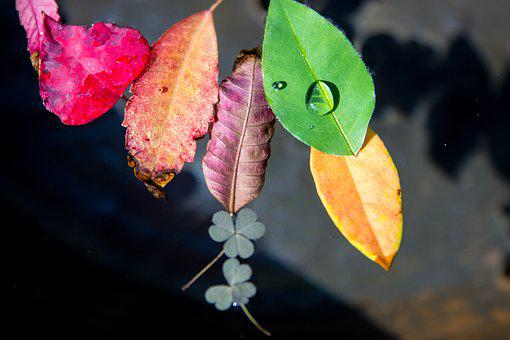 Trickle, The Leaves, Plants, Leaf, Abstract, Green, Dew