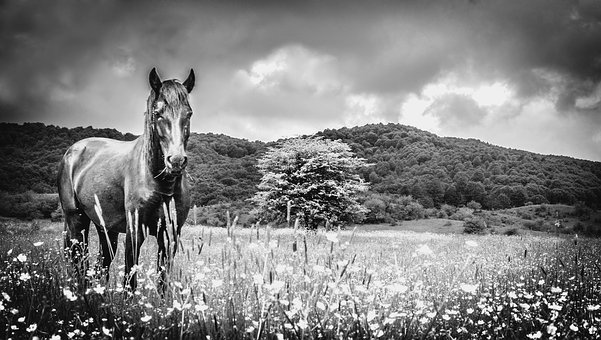 Horse, Meadow, Black And White, Loneliness, Melancholy