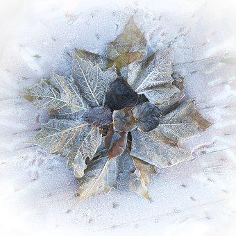 Winter, Frost, Ice, Sheet, Leaves, Snow, Freezing Rain