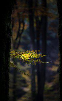 Autumn, Forest, Leaves, Tree, Trees, Autumn Forest