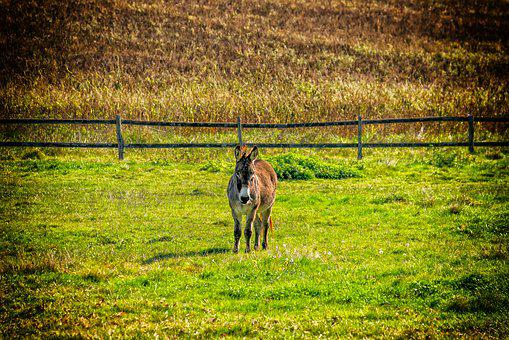 Donkey, Animal, Pasture, Peaceful, Lonely, Alone