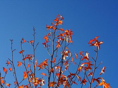 Autumn, Sky, Leaves, Tree, Golden Autumn, Mood, Yellow