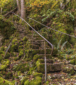 Stairs, Overgrown, Old, Moss, Nature, Emergence, Green