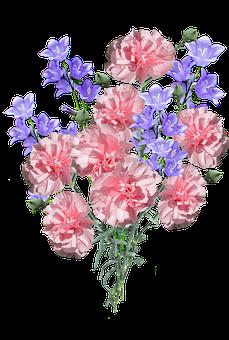 Carnations, Pink, Flowers, Blue Plants, Garden, Nature