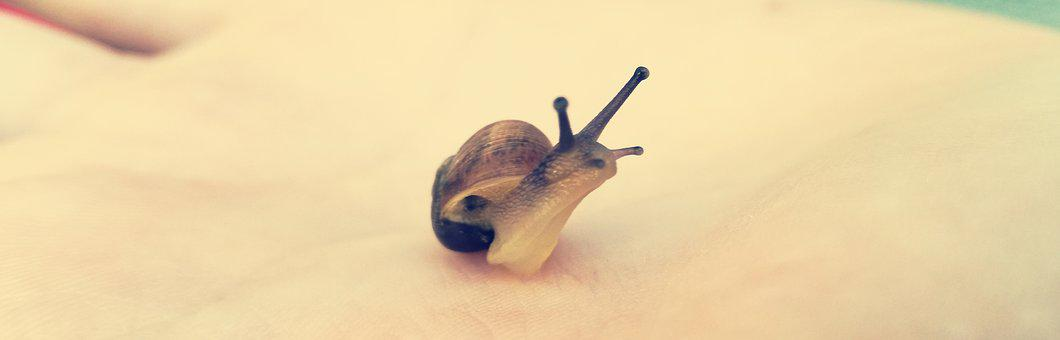 Gastropod, Nature, Snail, Slow