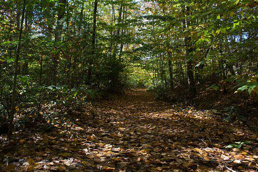 Fall Leaves, Path, Forest, Trail, Woods, Autumn