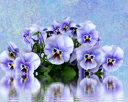 Pansy, Spring, Nature, Purple, Spring Flower, Violaceae