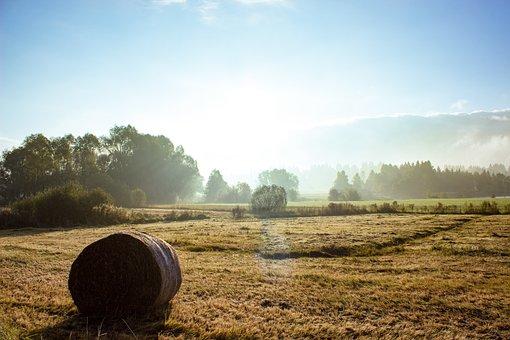 Autumn, Allgäu, Fog, Colorful, Rest, Relaxation