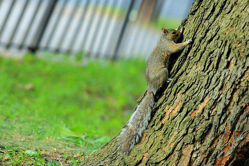 Trees, Squirrel, Pet, Green Grass, Tilt