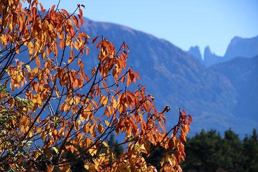 Autumn, Leaves, Tree, Fall Foliage, Golden Autumn