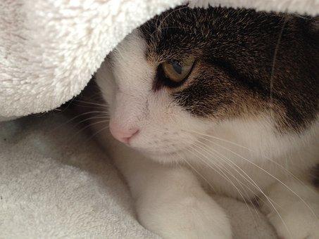 Cat, Animal, Pet, Dreamy, Blanket