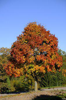 Tree, Landscape, Autumn, Leaves, Fall Foliage