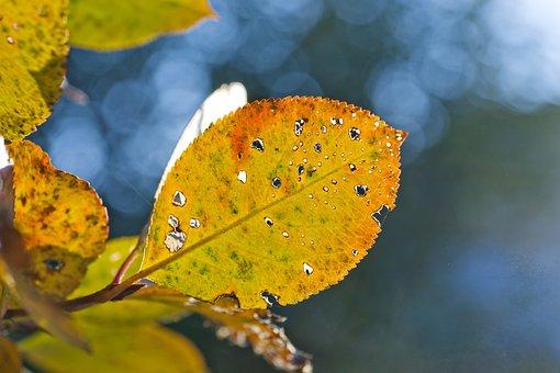 Autumn, Background, Yellow, Leaves, Day, Beautiful, Sun