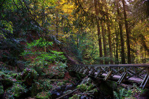 Forest, Bridge, Gorge, Leaves, Nature, Scenic, Wood