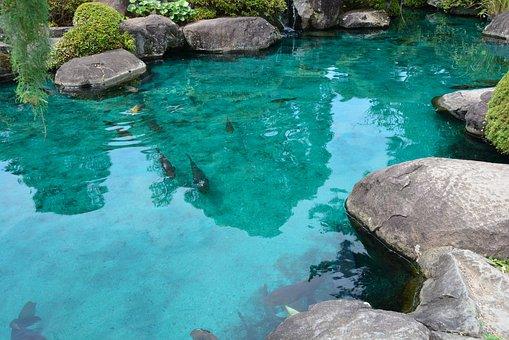 Pond, Carp, Temple