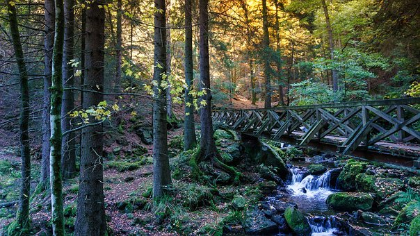 Forest, Gorge, Web, Nature, Rock, Landscape, Dangerous
