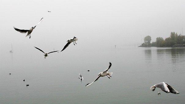 Morning Mist, Dawn, Autumn, The Seagulls, Flight, Mood