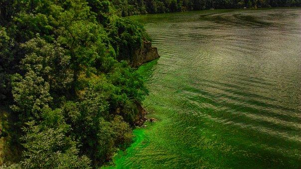 Landscape, Water, Forest, Landscape Water, Nature