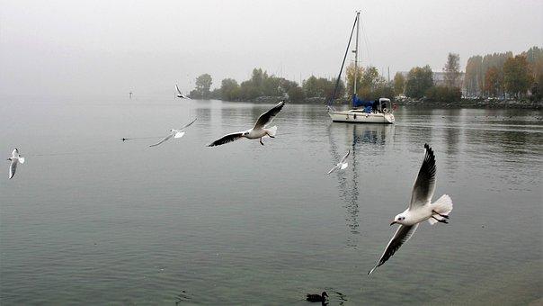 Morning, Lake, Dawn, The Silence, The Seagulls, The Fog