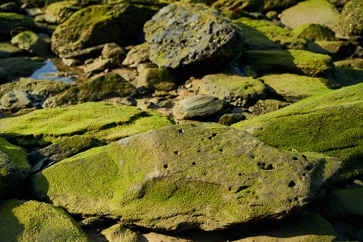 Kennedy, Rocky, Water, Moss, Green, Mold, Nature, Macro