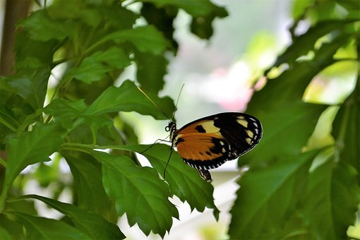 Monarch Butterfly, Insect, Flowers, Monarch, Butterfly