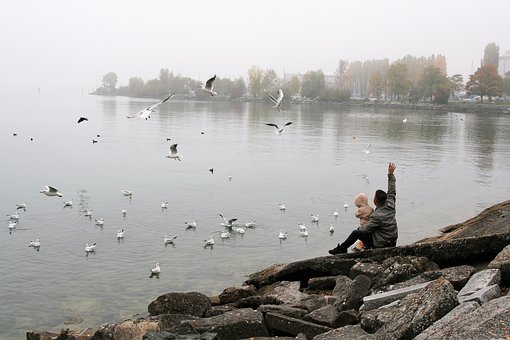 Lake, Autumn, Morning, The Seagulls, Father, Toddler
