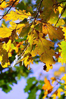 Autumn, Holidays, Color, Yellow Leaf, Yellow, Nature