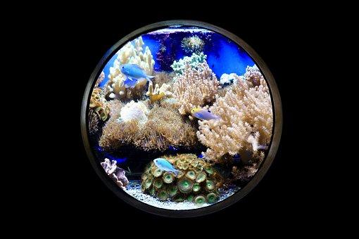 Fish, Aquarium, Night, Porthole, Coral Reef, Coral