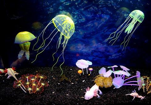 Underwater World, Jellyfish, Beauty, Sea, Pestresistant