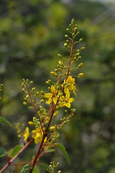 Yellow Flower, Branch, Wild